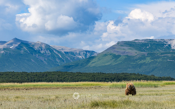Brown bear in front of the mountains of Katmai National Park