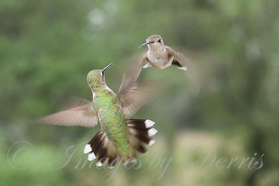 Dueling Hummers