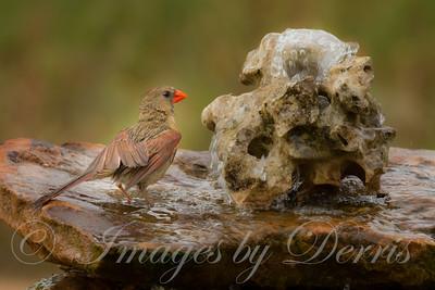 Mrs, Cardinal