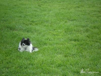 Dog in Grassy Field