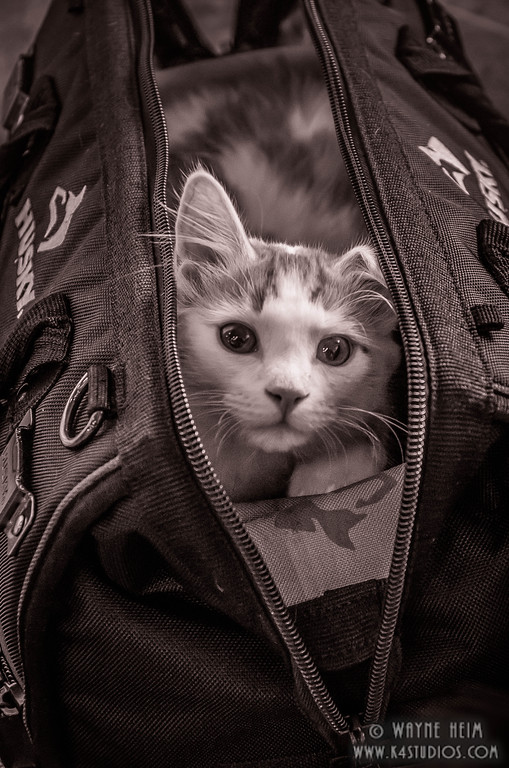 Cat in a Bag _ Black & White Photography by Wayne Heim