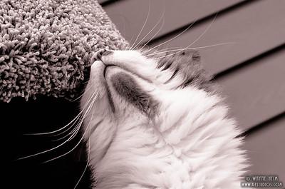 Feels Good - Black & White Photography by Wayne Heim