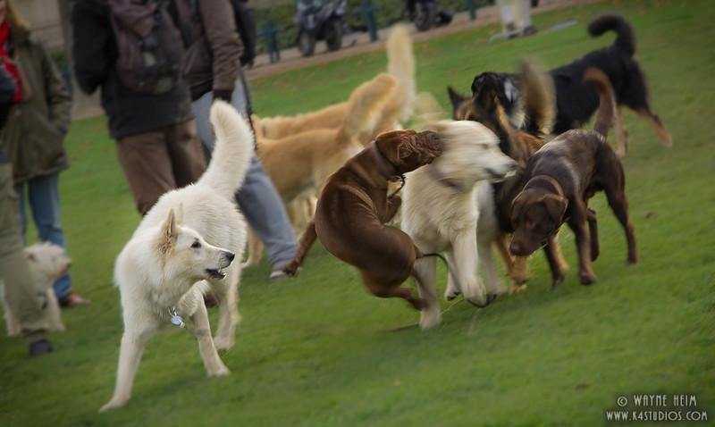 Dog Park - Photography by Wayne Heim