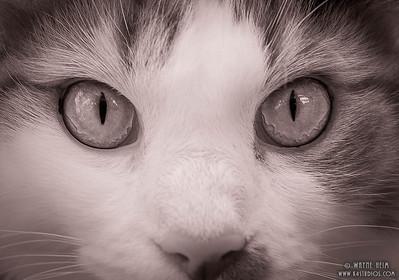 Cat's Eyes -  Black & White Photography by Wayne Heim