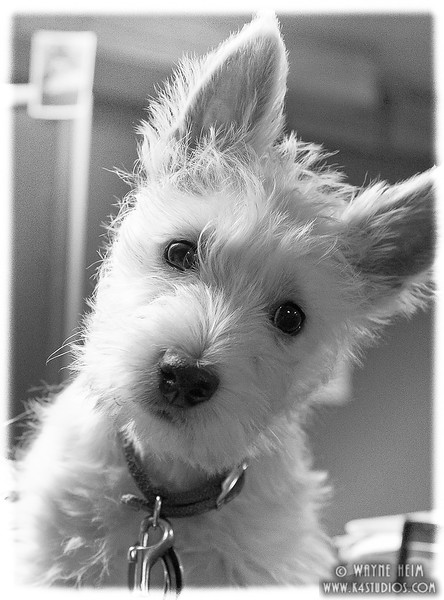 Hi There -- Black and White Photography by Wayne Heim