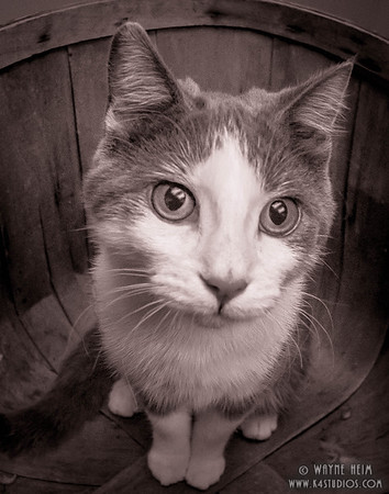 Cat in A Basket - Black & White Photography by Wayne Heim