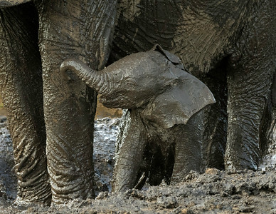 Mud bath with mom