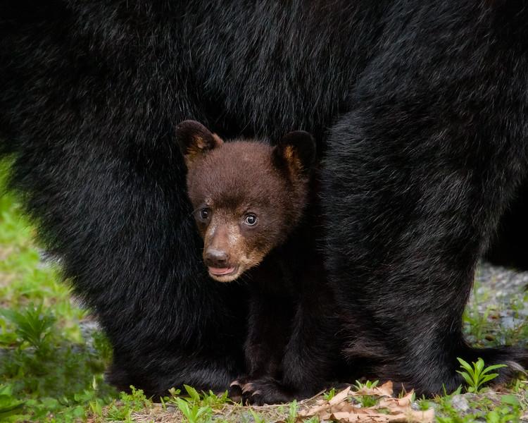 Hiding Under Mom