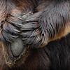 Bearfoot