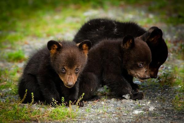 Three Little Bears