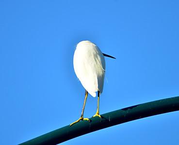 Birding 2012