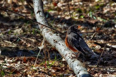 Birds of Huntley Meadows Park - Mar 2010