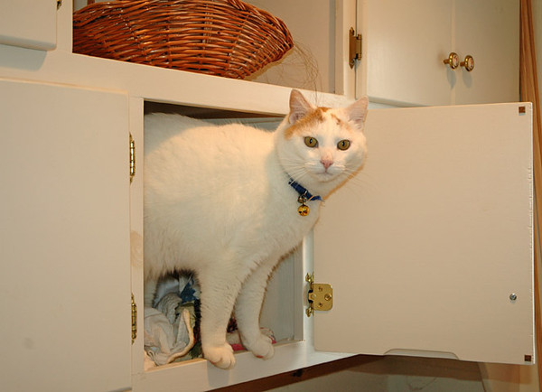"""<div class=""""jaDesc""""> <h4> Turbo in Laundry Bin - February 27, 2010 </h4> <p> One of the laundry bin doors was left open, so Turbo decided to jump up into it and explore. When Lynn came back out to do a load of wash, Turbo watched her from his perch.</p> </div>"""