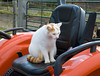 """<div class=""""jaDesc""""> <h4> Turbo on Tractor Seat - October 18, 2009 </h4> <p> Turbo was watching me split wood for his perch on the tractor seat.  He follows Lynn and I around wherever we go just like our dog Coby.</p> </div>"""