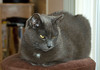"""<div class=""""jaDesc""""> <h4> Geagan Resting - November 11, 2009 </h4> <p> Meet Geagan, my daughter's second cat.  He likes to rest on this stool by a large window and enjoy the warmth of the afternoon sun.</p> </div>"""
