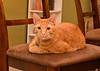"<div class=""jaDesc""> <h4>Keegan - October 26, 2017 </h4> <p>One of my daughter's young cats.</p> </div>"