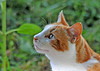 """<div class=""""jaDesc""""> <h4> Columbus Watching Squirrel - August 27, 2010 </h4> <p>Columbus was watching a gray squirrel move through the thick vines beside our porch.</p> </div>"""