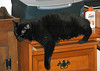 """<div class=""""jaDesc""""> <h4>Moonshine Taking it Easy - December 26, 2005 </h4> <p> Our older cat Moonshine likes to sprawl on the corners of desktops and counters. </p> </div>"""