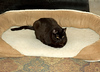 """<div class=""""jaDesc""""> <h4> Moonshine Claims Dog Bed - November 29, 2008 </h4> <p> Our 16 year old cat Moonshine frequently claims the dog bed for himself.  It is located in front of the wood stove where he can enjoy the warmth.</p> </div>"""