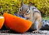 """<div class=""""jaDesc""""> <h4> Chipmunk Tasting Grape Jelly - May 14, 2014 </h4> <p>He came up looking for peanuts and sunflower seeds and found this stuff.</p> </div>"""