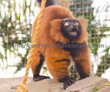 Cle Zoo_0129