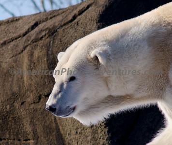 Cle Zoo_0263