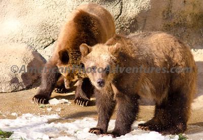 Cle Zoo_0339