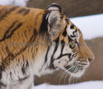 Cle Zoo_0366