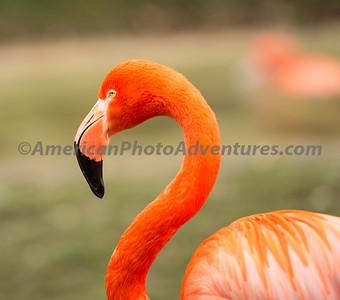 Columbus Zoo_0327