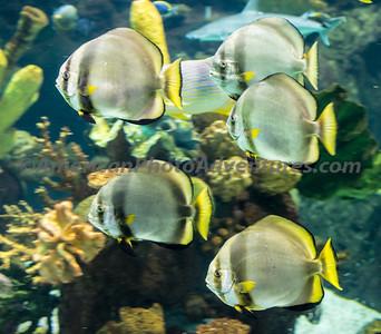 Columbus Zoo_0586