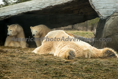 Columbus Zoo_0228