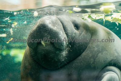 Columbus Zoo_0449