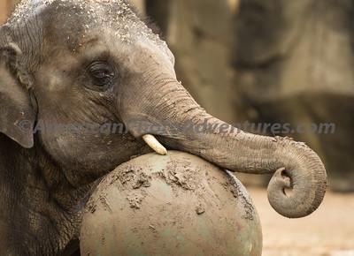 Columbus Zoo_0191