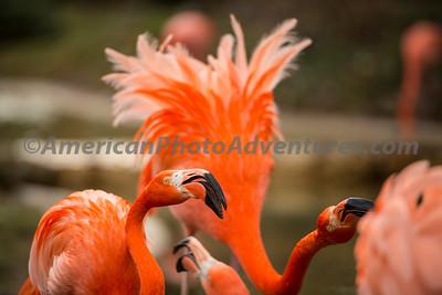 Columbus Zoo_0609