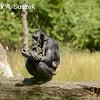 Chimp & Baby