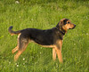 """<div class=""""jaDesc""""> <h4> Coby Ready to Play Frisbee </h4> <p> </p> </div>"""