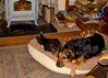"""<div class=""""jaDesc""""> <h4> Coby and Phantom Napping by Fire - January 8, 2017 </h4> <p>This is Coby's bed, but Phantom always takes the prime spot closest to the wood stove.  Coby is too polite to object.</p> </div>"""
