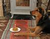 "<div class=""jaDesc""> <h4> Coby Celebrates Birthday</h4> <p> </p> </div>"