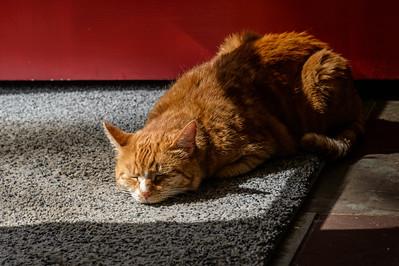 Cat Comfort 1