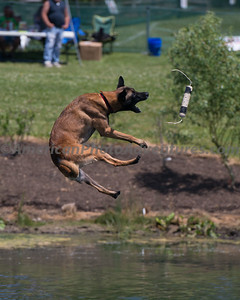 DogFest_20140607_253