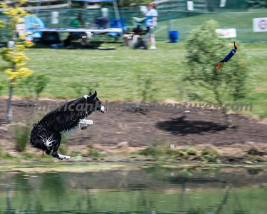 DogFest_20140607_198