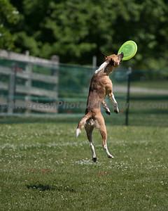DogFest_20140607_104