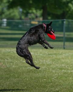 DogFest_20140607_154