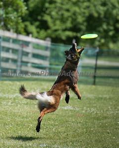 DogFest_20140607_069