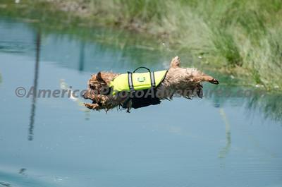 Flying Dogs of Farmpark