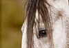 "<div class=""jaDesc""> <h4> Lana - Gray Arabian Mare - April 17, 2012</h4> <p> Taken on a horse farm in Virginia.</p> </div>"