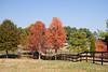 Horse Farm in the Fall