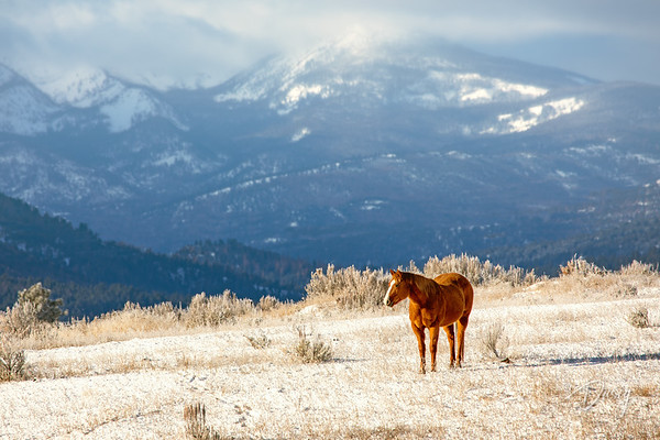 Horse on a Hill