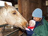 """<div class=""""jaDesc""""> <h4> Sapphire Meets Camille - November 11, 2010</h4> <p>  When our daughter Sarah brought 5 month old Camille through the barn, our oldest horse Sapphire reached out to sniff her face.  Camille, who adores all animals, had a look of amazement and reached out with both hands to touch Sapphire's lips.</p> </div>"""