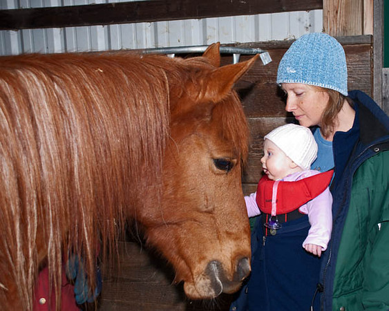 """<div class=""""jaDesc""""> <h4> Bronzz Meets Camille - November 11, 2010</h4> <p>  Bronzz was more interested in his hay then meeting Camille. We bribed him with a peppermint treat to get him to pick his head up for a brief greeting.</p> </div>"""
